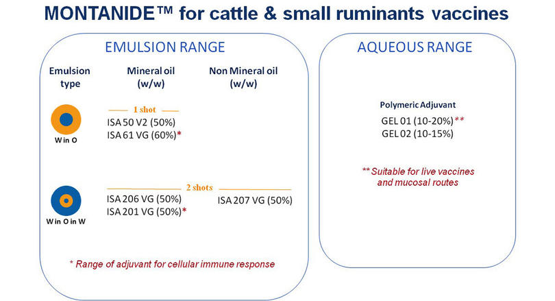 MONTANIDE™ offer for cattle and small ruminants vaccines