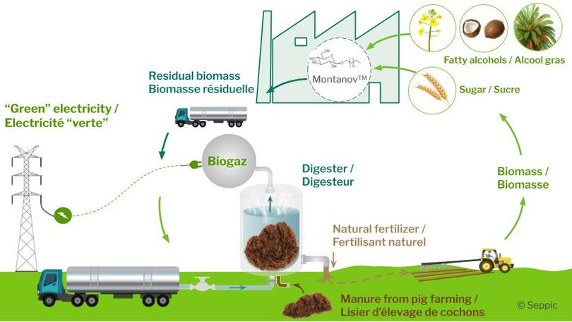 Recycling of plant biomass from the Montanov™ manufacturing process
